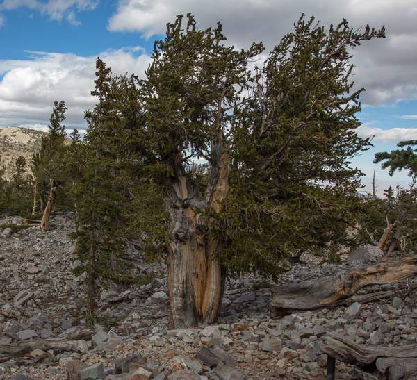 Great Basin NP-4