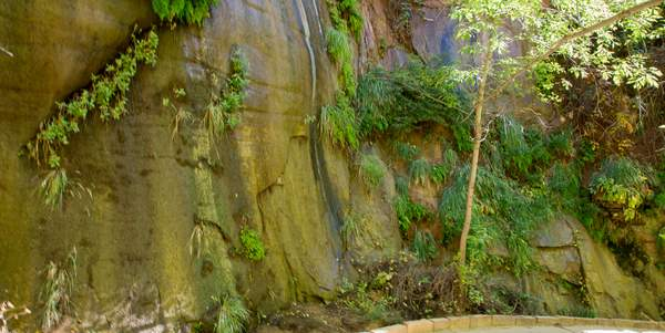 Zion Canyon-4