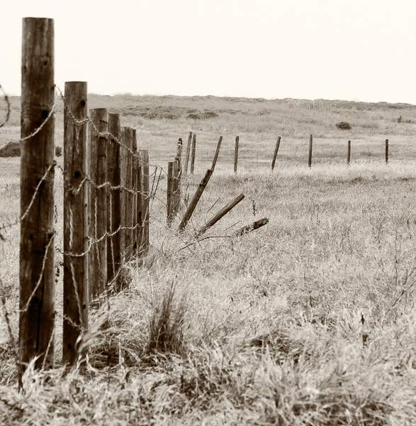 Old Fence in Fiscalini Ranch Preserve (since removed)
