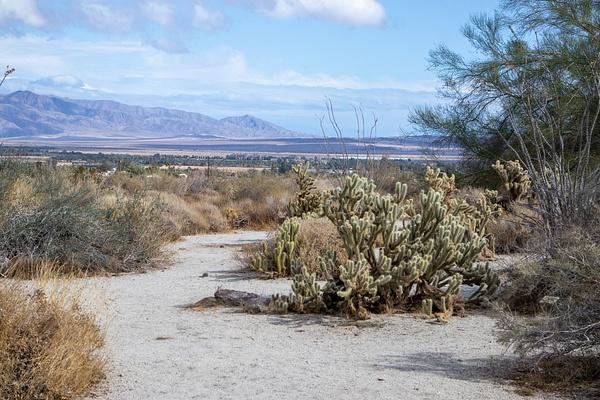 Anza Borrego Desert State Park CA 2019 by Harrison Clark