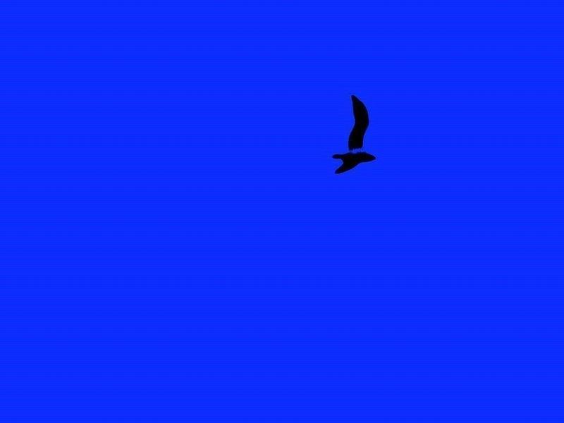 Bleue liberté...