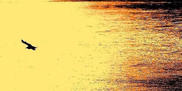 Plage de reflets fluviaux...
