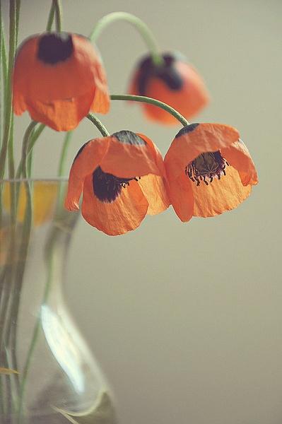 Flowers by Mihaela .