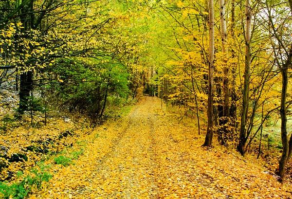 Fall by Rhianne