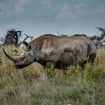 Etosha National Park [1] - Namibia - Mar '15
