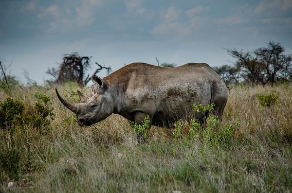 Etosha National Park [1] - Namibia - Mar '15 by Jack Carroll