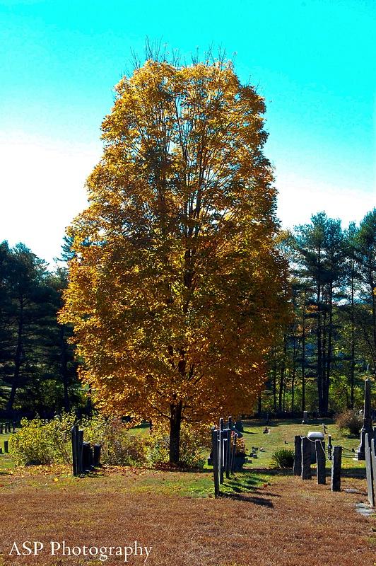 Early Autumn with the Nikon 033-1