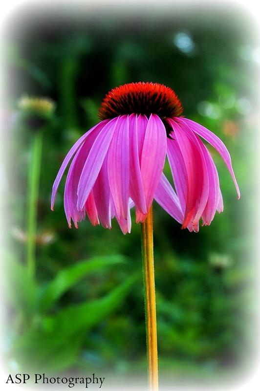 close up of purple flower-1