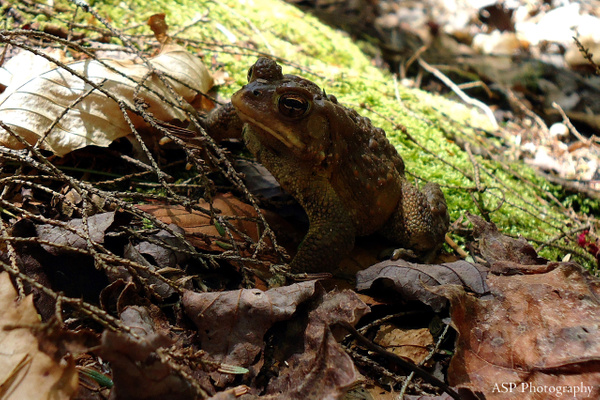 toad in camo 3-1 by amysuephoto