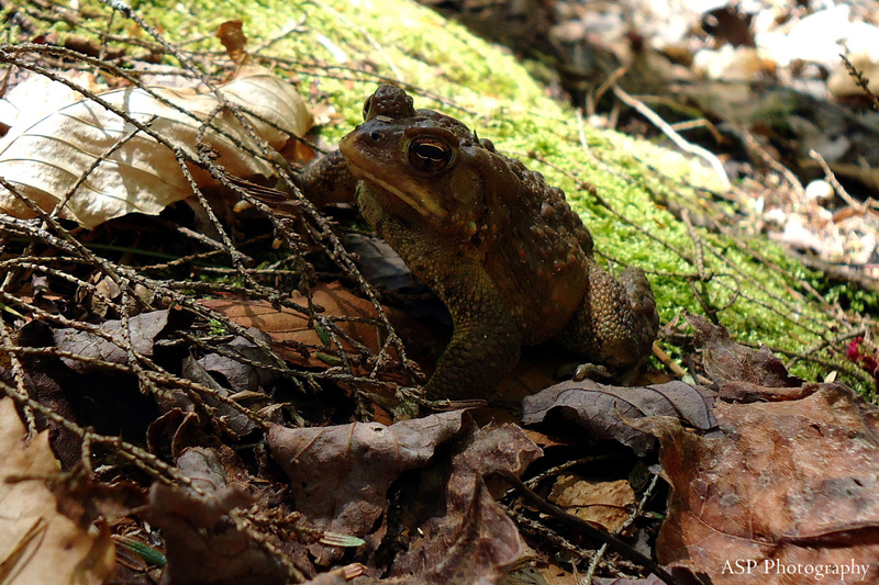 toad in camo 3-1