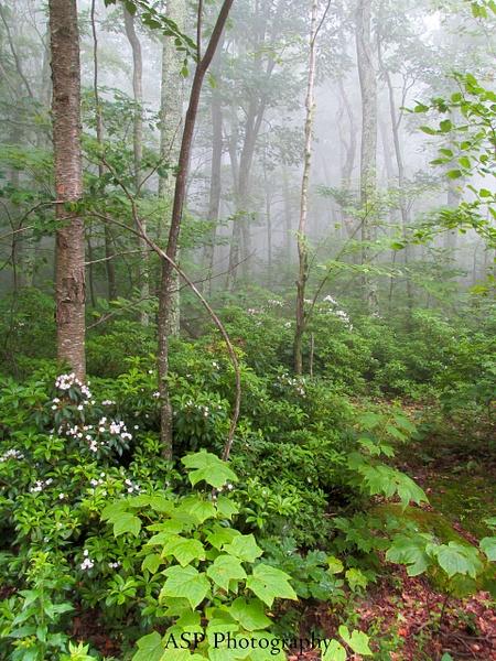 Overlook Mountain, Catskills Summer 2014 by amysuephoto...