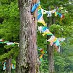 Overlook Mountain, Catskills Summer 2014
