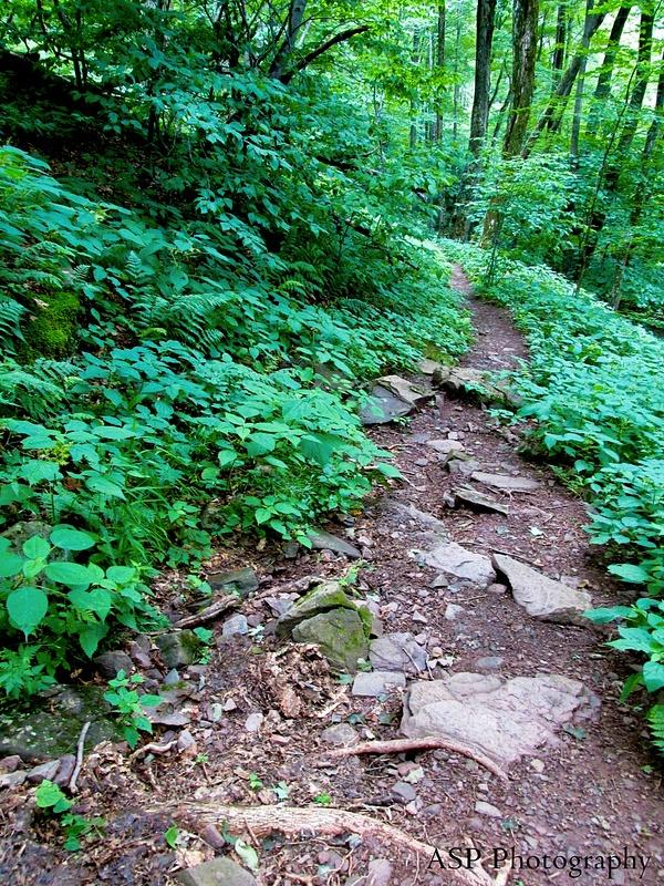 New York Vacation Overlook Mountain Dibbles Quarry Katarskill 183-1