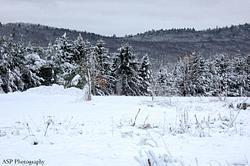 Snowy Fall 2014