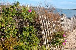 Cape Cod Beaches and Cranberry Bog 2015