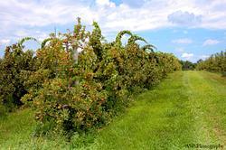 Alyson's Orchard in Walpole NH
