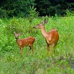 Minnewaska State Park, NY 2015