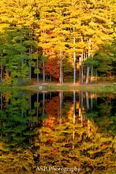 Fall Reflections, 2015