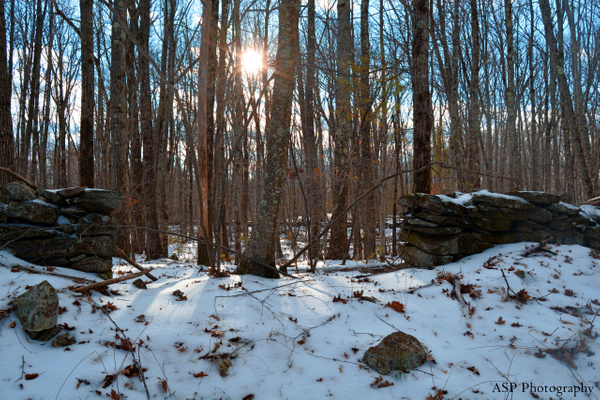 Watchusett Sanctuary, January 2016 by amysuephoto by amysuephoto