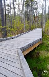 Swamp Boardwalk and Blueberry Blossoms, 2016