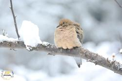 Birds and Misc Winter, 2016