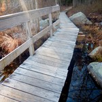 Wilson Pond and Beaver Pond, 2015