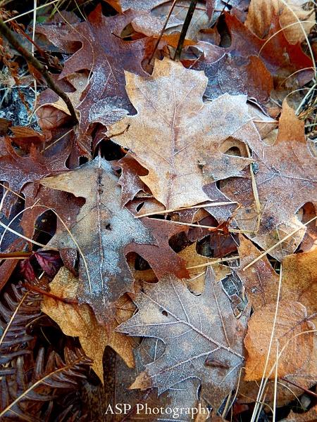 Flat Rock Walk, Fall 2015 by amysuephoto