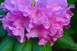 Backyard Blooms 2016