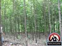 Colimes, Guayas, Ecuador Investing Development  For Sale - Teak Plantations by internationalrealestate