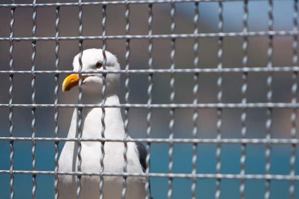 Jail Bird @ Alcatraz