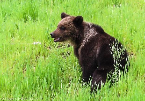 Медведи by Vestrannik680