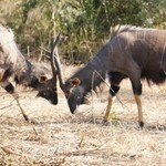 I Dream of Africa- Zulu Nyala Game Lodge