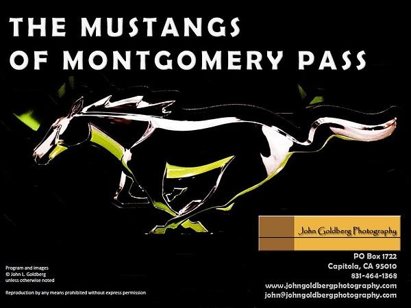 The Mustangs of Montgomery Pass by John Goldberg