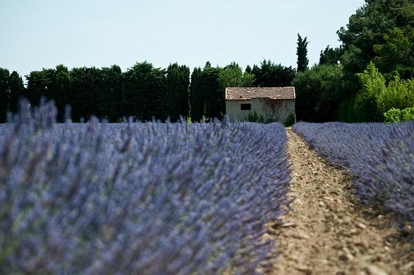 France by Svetlana Punte