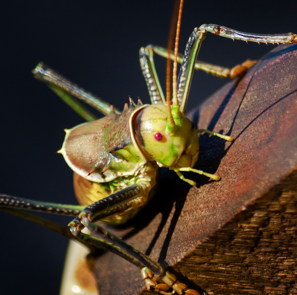 Hopper Square zoom - Wildlife - Steve Juba Photography