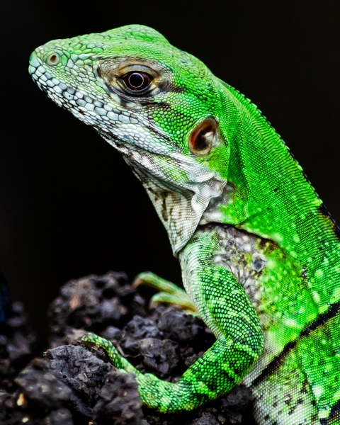 liz closest - Wildlife - Steve Juba Photography