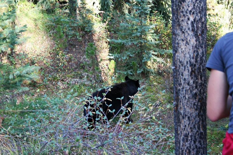 RM 155 Und noch ein Bär