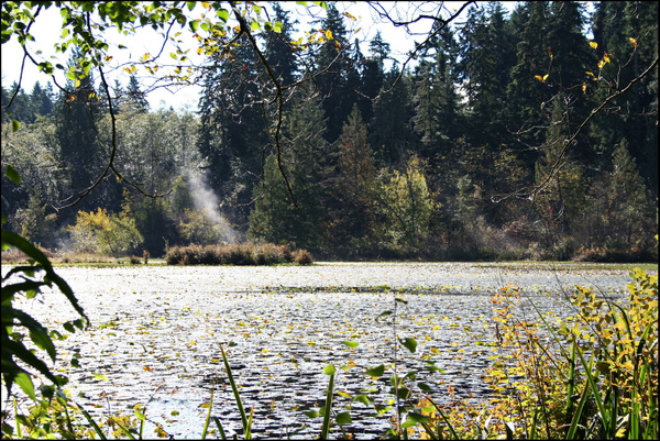 Vancouver 203 StanleyPark Beaver Lake by StefsPictures