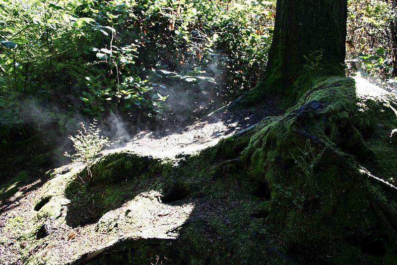 Vancouver 204 StanleyPark dampfende Bäume