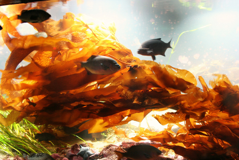 Vancouver 083 Aquarium