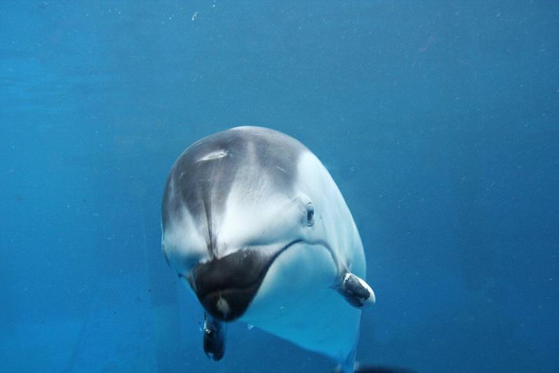 Vancouver 091 Aquarium - freundlicher Fisch