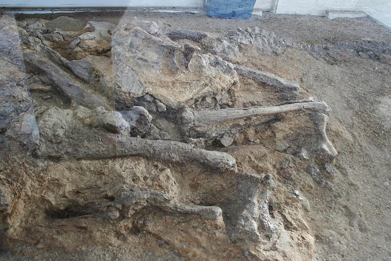 Dinoland 035 Fossilien