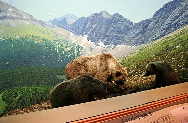 Edmonton RAM Wild Alberta 104 by StefsPictures