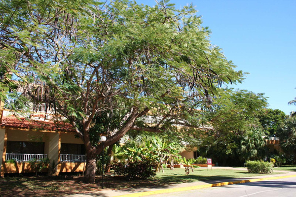Cuba 168 Der beruehmte Affenbrotbaum by StefsPictures