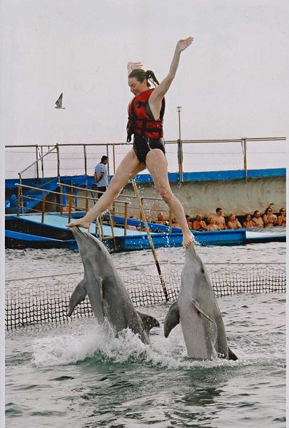 Cuba - bei den Delfinen 3 by StefsPictures