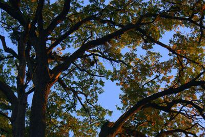 Sóstói erdő ősszel | Autumn forest