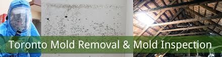 Mold Removal Toronto by Elliepearce55