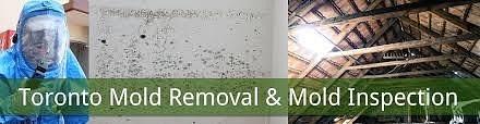 Mold Removal Toronto