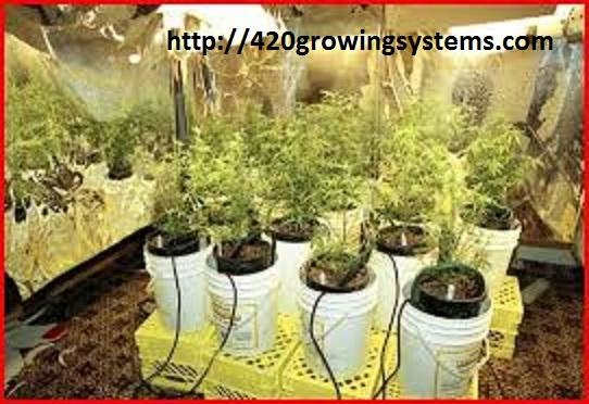 Hydroponic growing systems by GrowPot