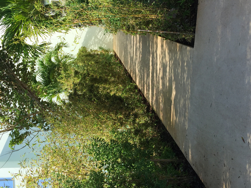 Walkway past EC Imperial suite - much more mature plantings since the grand opening